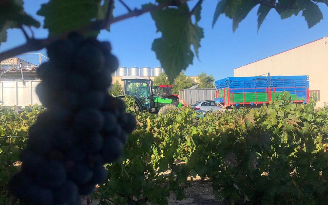 Los viticultores de CLM advierten de que no quieren volver a recibir por su uva un 20% por debajo de lo que les cuesta producir