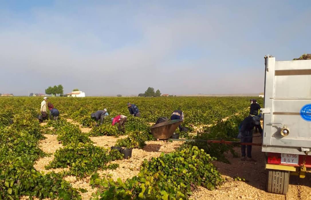 Vendimia: La primera estimación nacional prevé una disminución de un 15% de la cosecha con 39 millones de hectolitros