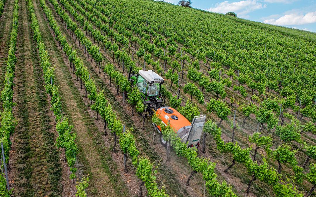 Las buenas perspectivas comerciales para los vinos españoles deben traducirse en unos precios rentables para los viticultores