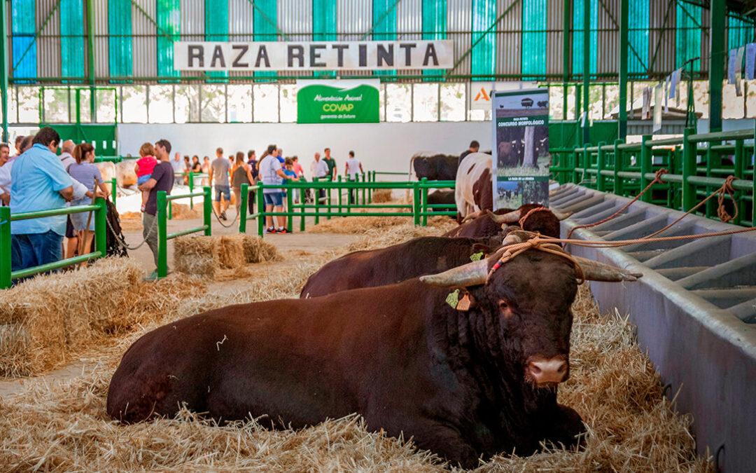 Zafra se une a la Red Municipal Ganadero-Cárnica por la relevancia del sector para la economía, sociedad, cultura y gastronomía local