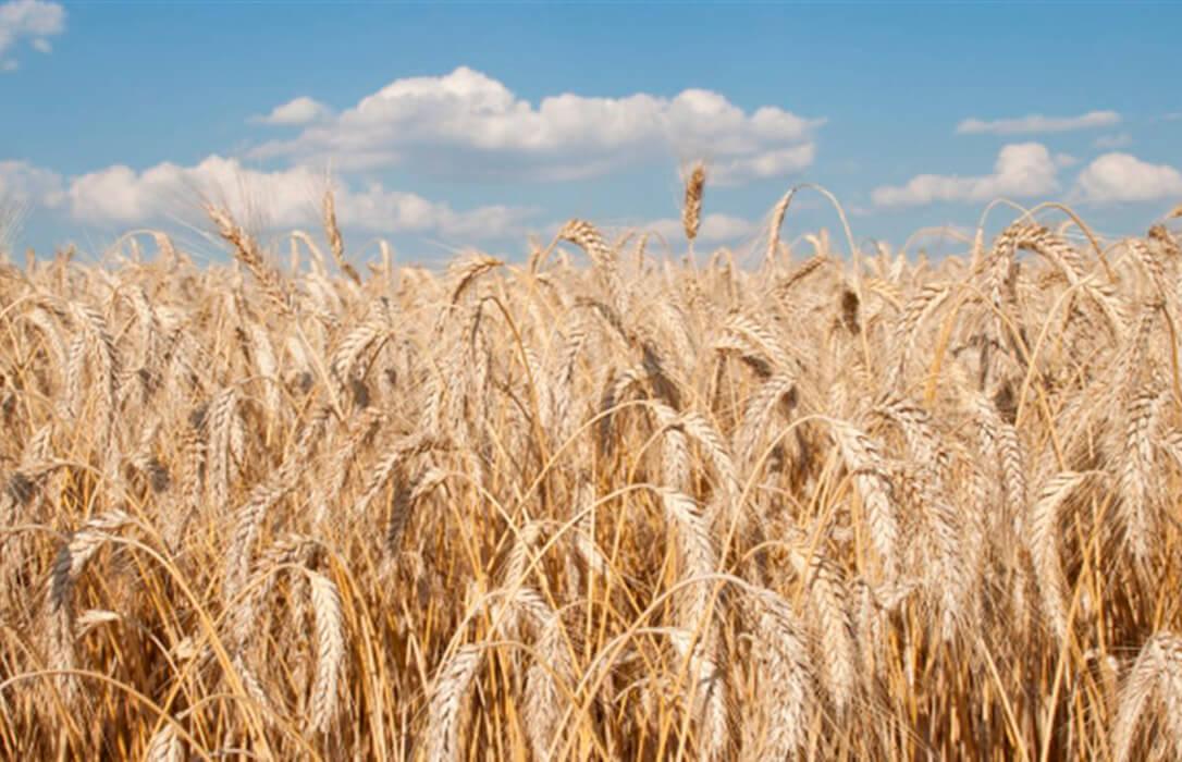 Las cebadas de Agromonegros: Líderes en todos los terrenos