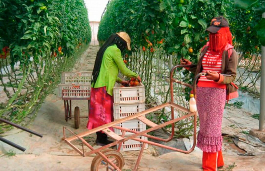 """Marruecos en """"Fruit Attraction"""", un problema Real"""