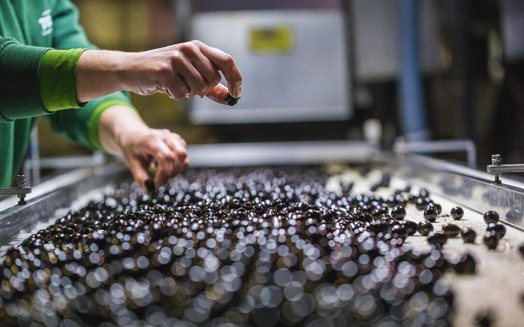 """Espera y satisfacción ante la """"inminente"""" resolución de EEUU sobre la reducción de los aranceles a la aceituna negra"""