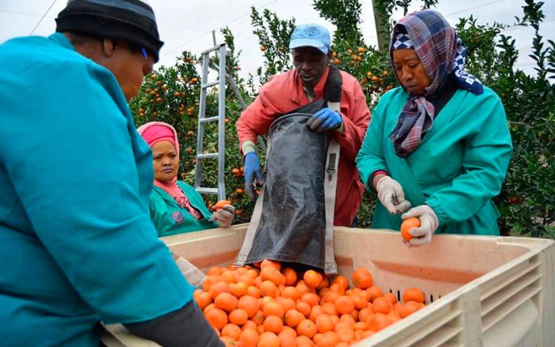 Mucho Pacto Verde en la PAC pero detectan por tercer año cítricos importados en los supermercados con pesticidas prohibidos