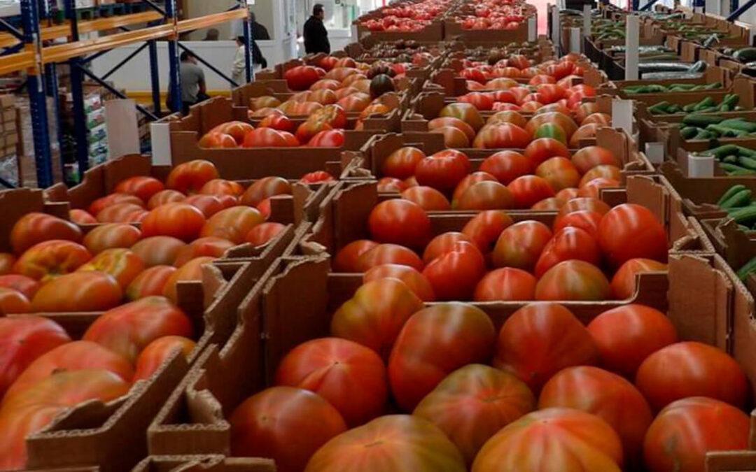 Exigen a la CE un control real sobre la importación de tomate de Marruecos, con precios que se llevan sin revisar 20 años