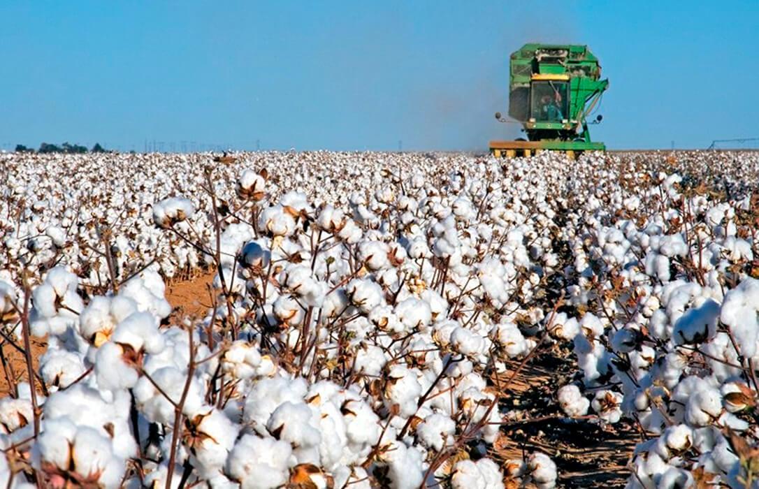 Piden que se tenga en cuenta la sequía para el acceso al pago específico del algodón y la ayuda agroambiental