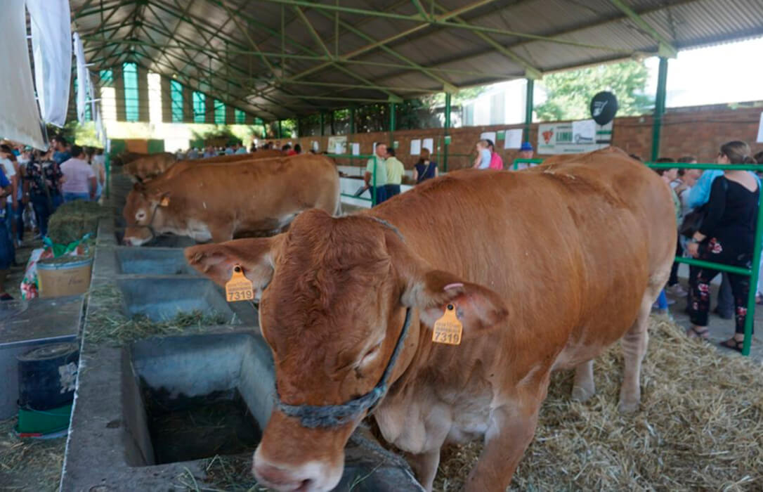 La FIG de Zafra 2021 reunirá casi 2.000 cabezas de ganado de 150 ganaderías de toda España durante cuatro días