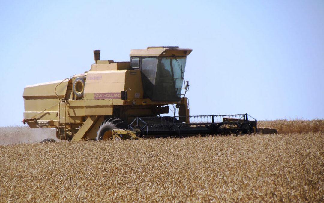 Cooperativas rebaja levemente la cosecha española de cereales de este año con respecto a la segunda estimación anual