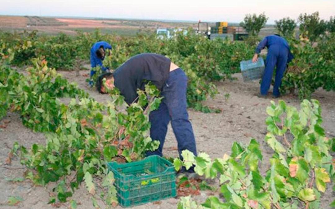 Indignación en el sector porque la Lonja de Extremadura deja de cotizar el precio del vino a punto de acabar la vendimia