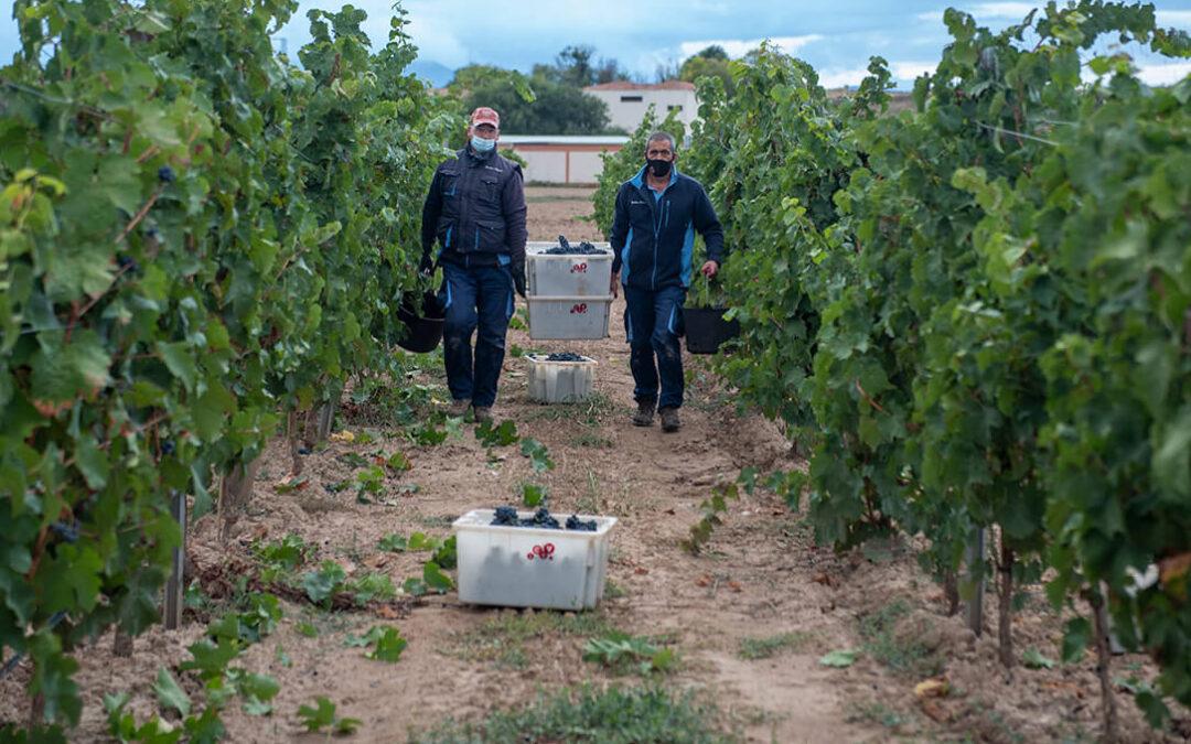 Investigación experimental vitivinícola ante retos como el cambio climático, la sostenibilidad y la viticultura de precisión