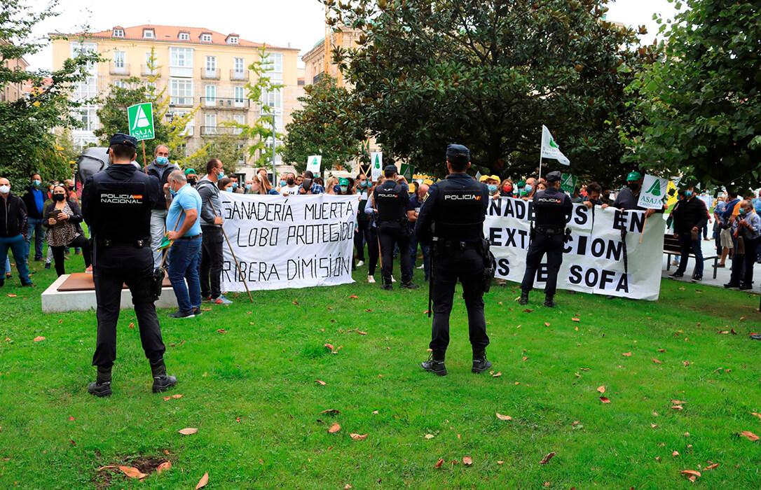 Campanos y gritos de «traidor» a Pedro Sánchez en Cantabria por respaldar la protección del lobo