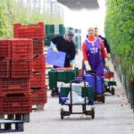 Los invernaderos solares generan un 25% del empleo agrario andaluz, según un estudio