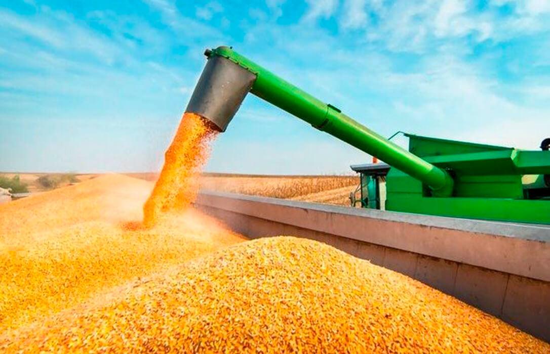 Lo que la PAC puede romper: Se esperan los mejores resultados del maíz en León, con 235 millones de facturación