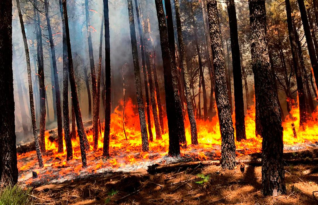 La Junta urge a la extracción de madera quemada en el incendio de Ávila para evitar la proliferación de plagas