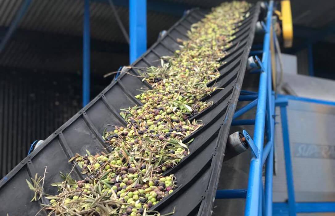 Tras el acuerdo nacional, QvExtra! confía en que la Junta de Andalucía mantenga el método de pago actual a los olivareros