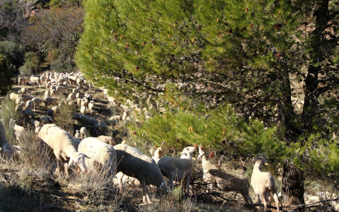 Denuncian que la aplicación actual de la PAC está perjudicando gravemente a los pastos, a la dehesa y a la ganadería extensiva