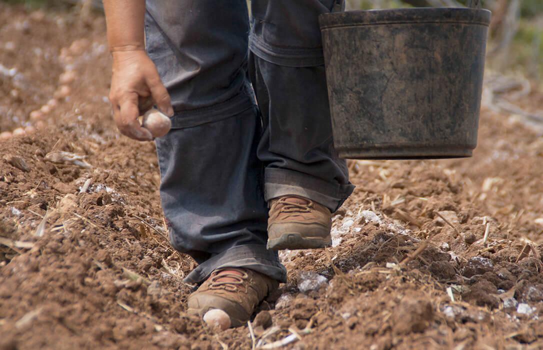 Debate ecoesquemas: Los agricultores ecológicos recibirán ayudas de la PAC a través del segundo pilar de desarrollo rural