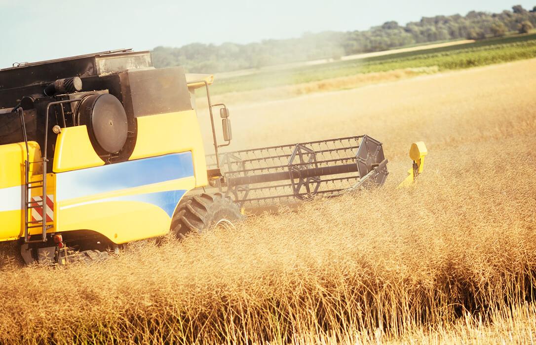 Lo mercados cerealistas no tienen un rumbo fijo y anotan nuevas subidas en casi todas las categorías salvo el maíz