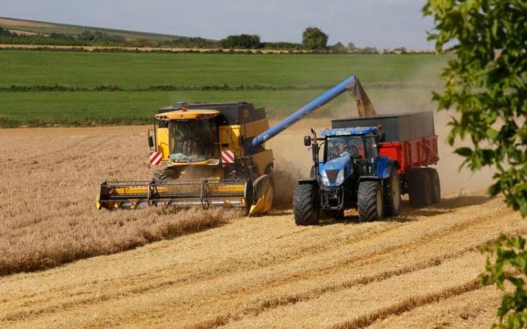El buen momento del cereal se acaba: Bajada moderada en la mayoría de categorías con un trigo duro que solo sube 13 euros