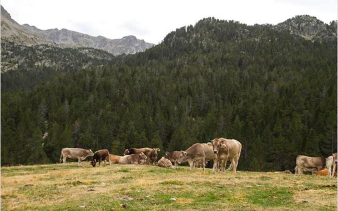 Provacuno recuerda la importancia del papel de las 'vacas bombero' para la prevención de los incendios forestales