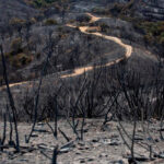 La Junta de Andalucía da los primeros pasos para diseñar las actuaciones de recuperación de Sierra Bermeja