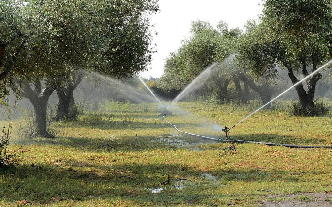 Exigen a la CHG que cumpla su compromiso y dote de riego al olivar el próximo 1 de octubre ante la inminente sequía