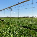 Los costes se disparan: Reclaman medidas urgentes ante la inasumible subida de la luz del 300% en las explotaciones agrarias