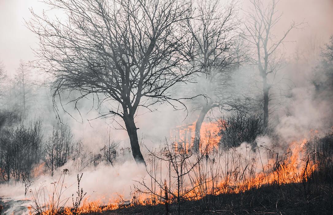 La UGR lidera una propuesta internacional para lidiar con el aumento de la intensidad y frecuencia de los incendios forestales