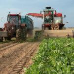 Dura respuesta al ministro Garzón por su ataque al sector azucarero-remolachero: «Deje la moqueta y pise el medio rural»
