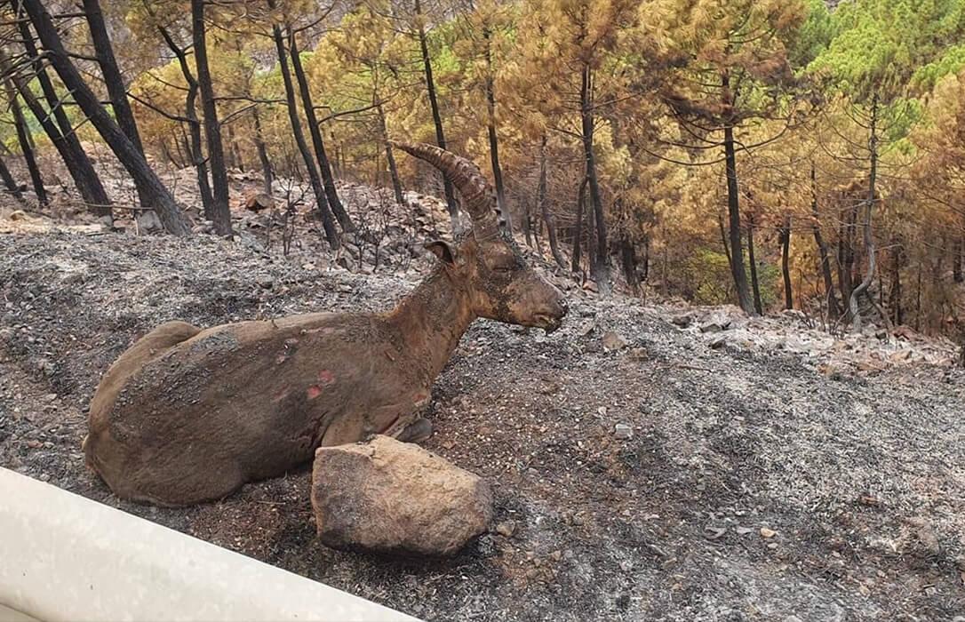 La Junta andaluza anuncia una inversión de 4,6 millones de euros en las actuaciones de emergencia del incendio de Sierra Bermeja