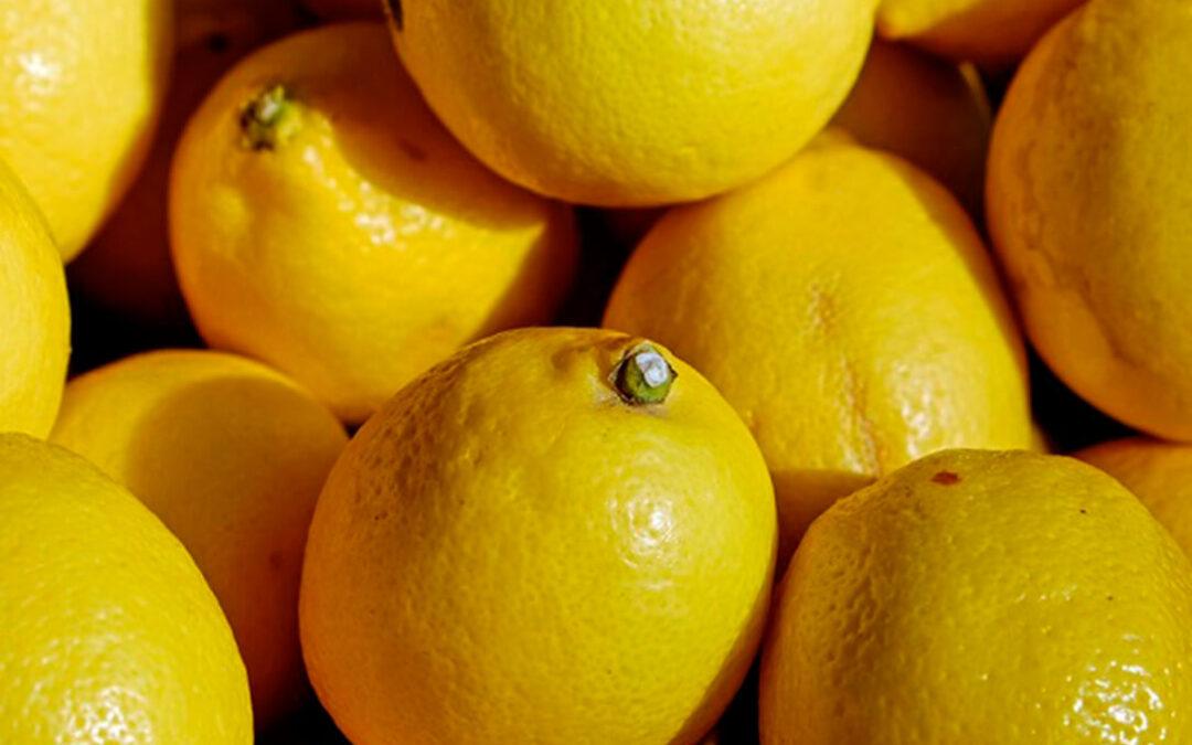 Comienza la campaña del limón con una previsión de 1,03 millones de toneladas, un 24% menos que el pasado año