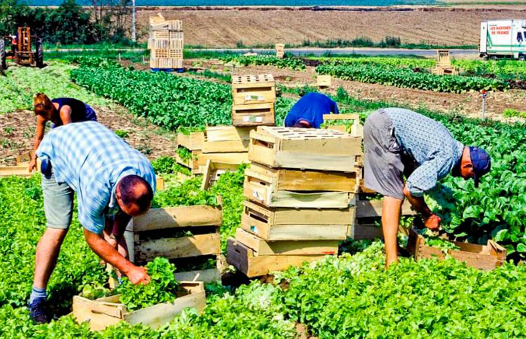 Francia reconocerá el cáncer de próstata provocado por los pesticidas como enfermedad profesional en el sector agrario