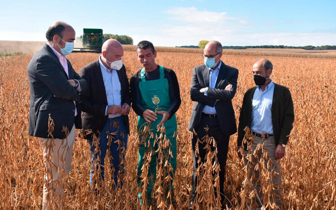 Castilla y León abre las puertas a la soja como un nuevo cultivo del regadío ante sus posibilidades de futuro