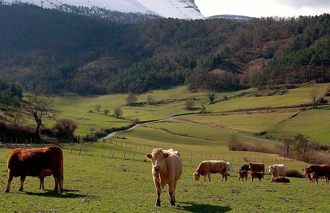 El Gobierno vasco destina 12 millones a paliar los efectos de la covid en la comercialización de los productos ganaderos