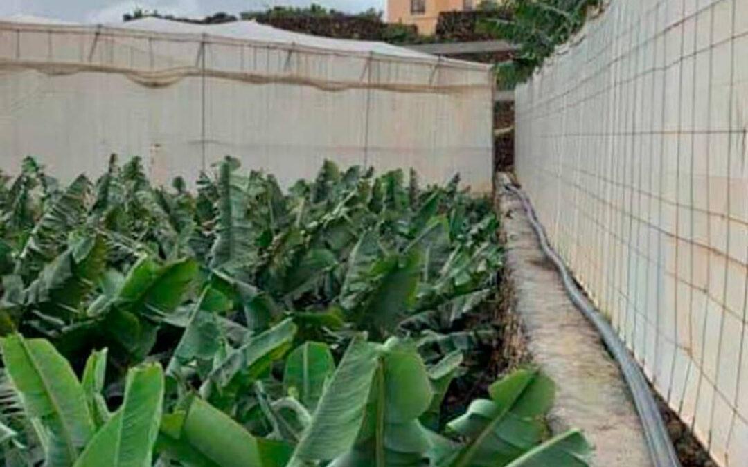 El Miteco instalará en La Palma desaladoras portátiles que garantizarán un caudal de 6.000 m3 diarios para el riego