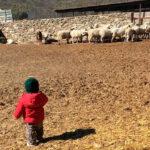 Desprecio a lo rural: Condena rotunda a la jueza que ha quitado la custodia de un hijo a su madre por vivir en la «Galicia profunda»