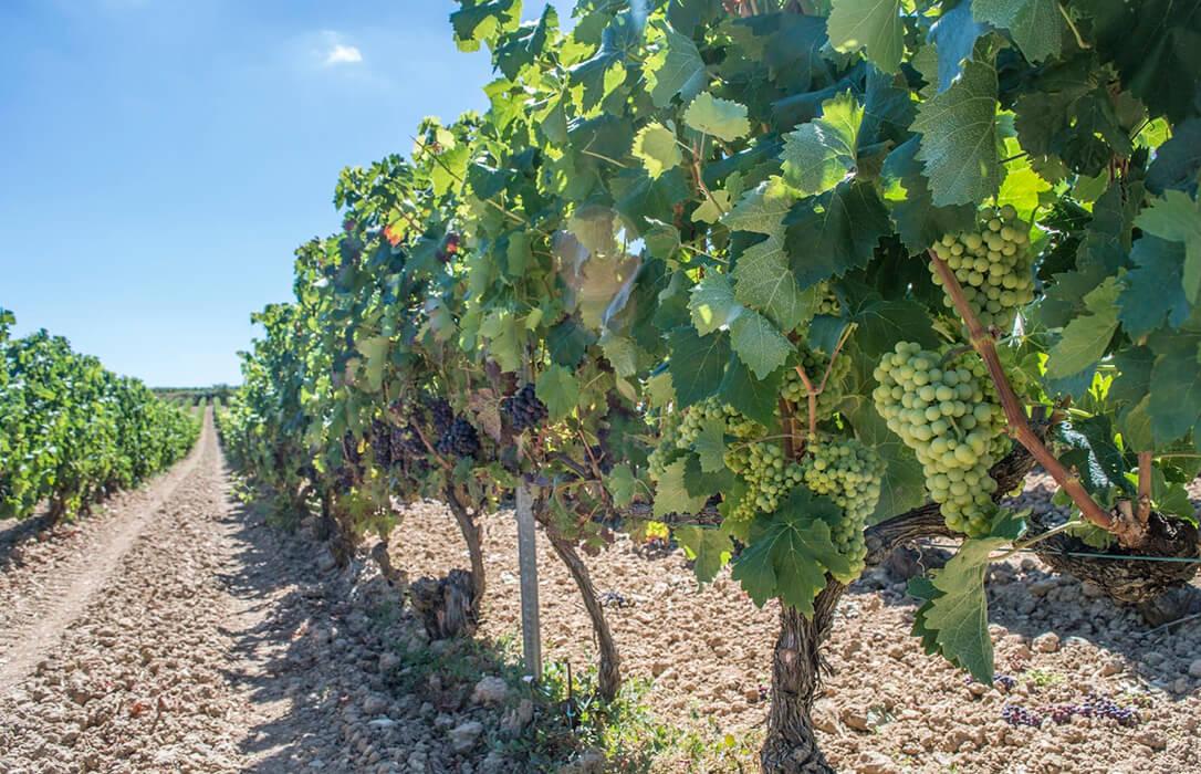 La mayoría del sector productor de la DOCa Rioja respalda no plantar viña hasta recuperar su rentabilidad