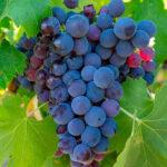Una bodega de Tarragona falsificó 50 millones de botellas de vino desde 2017 con distintivos falsificados de las DO Priorat, Terra Alta y Montsant