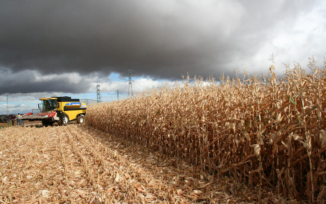 Los productores de maíz protestarán ante las puertas del Ministerio para sacar a este cultivo de las exigencias de la PAC