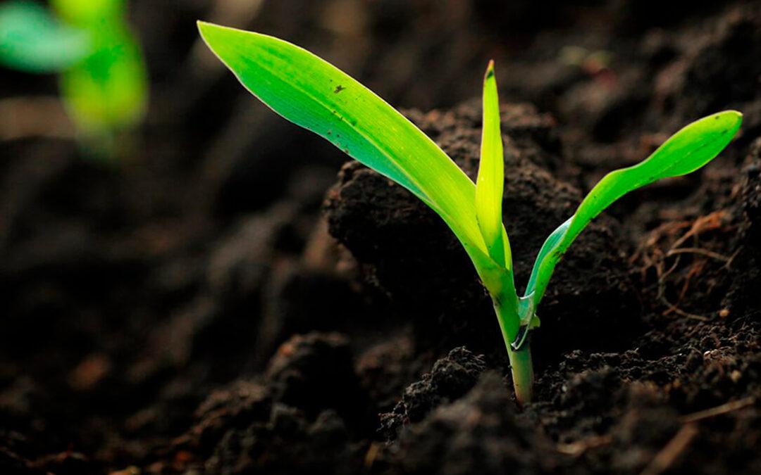 Grupo Fertiberia impulsará la primera planta de amoniaco y fertilizantes verdes a gran escala