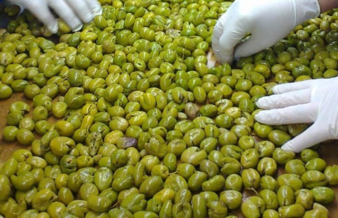 El cuarto aforo de la campaña de aceituna de mesa se sitúa en 593 mil toneladas debido a la distinta pluviometría en las regiones productoras