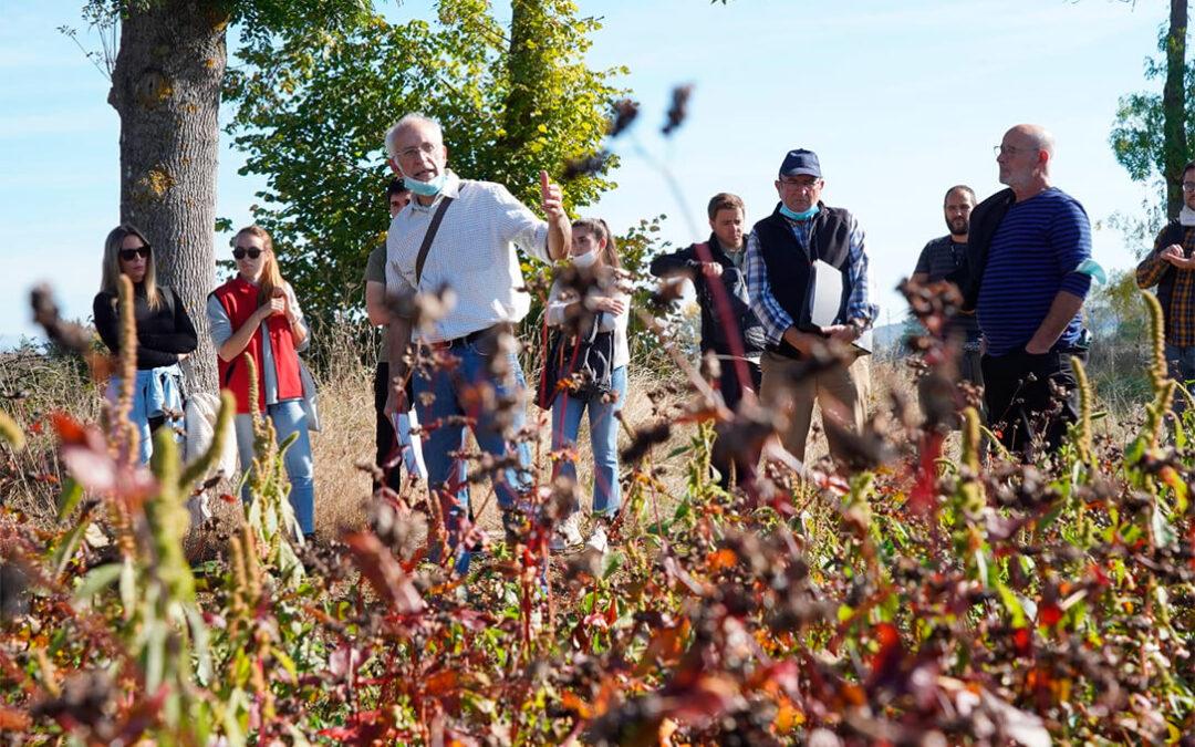 Aumenta la agricultura ecológica en Euskadi en superficies destinadas al cereal, pastos, forraje y cultivos de vid y frutales