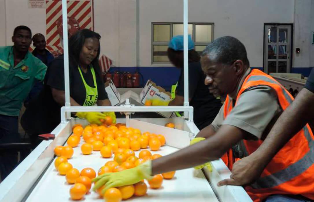 La CE comenzará a analizar la seguridad fitosanitaria de las importaciones de cítricos de Sudáfrica esta semana