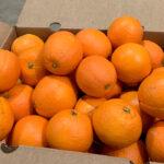 Denuncian la parálisis de compras y caída de precios a 0,15 €/kg en campo de las naranjas Navelina para el mercado europeo