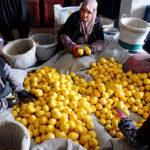 En solo dos meses ha habido 10 alertas sanitarias de limones turcos en la UE por presencia de pesticidas superando todos los récords