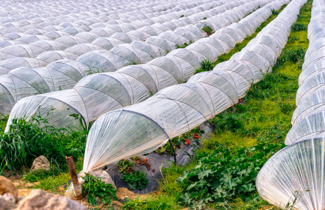 El sector hortofrutícola teme que la subida de los costes, en especial los insumos, retrase las inversiones programadas