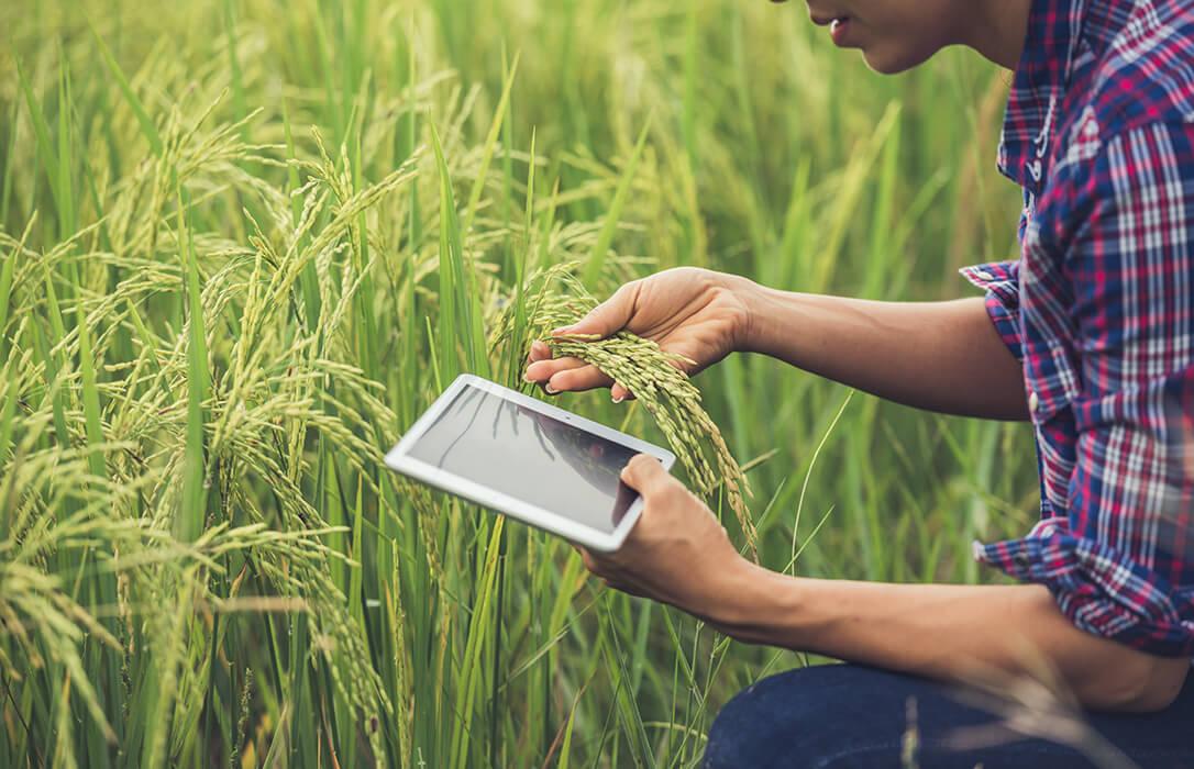 Aprobados los primeros 115,3 millones de euros para la transformación ambiental y digital del sector agroalimentario