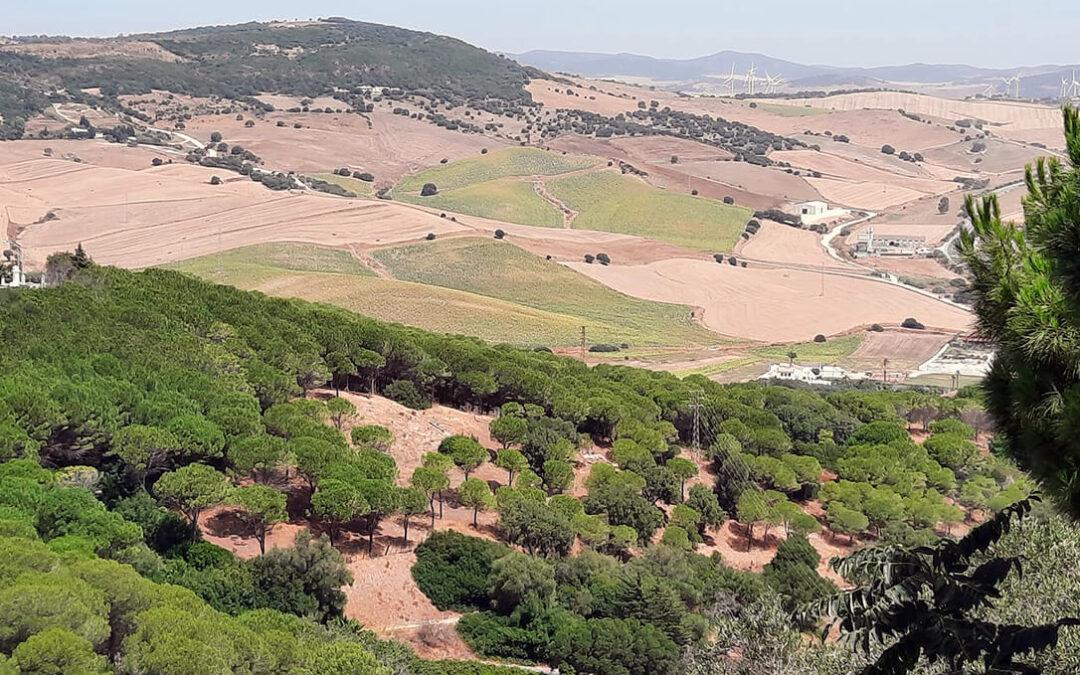 Andalucía no cede en su pulso: Asegura que será la única CCAA que perdería fondos con la aplicación del Plan Estratégico de la PAC