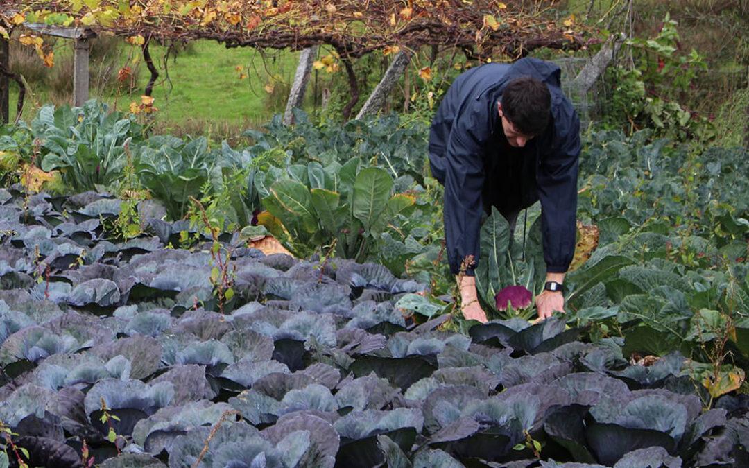 Cooperativas Agro-alimentarias de Andalucía reafirma su compromiso con la sostenibilidad al unirse al Pacto Mundial de la ONU