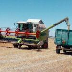 Los precios de los cereales siguen al alza con la cebada como protagonista con un trigo duro que subido un 89% desde enero